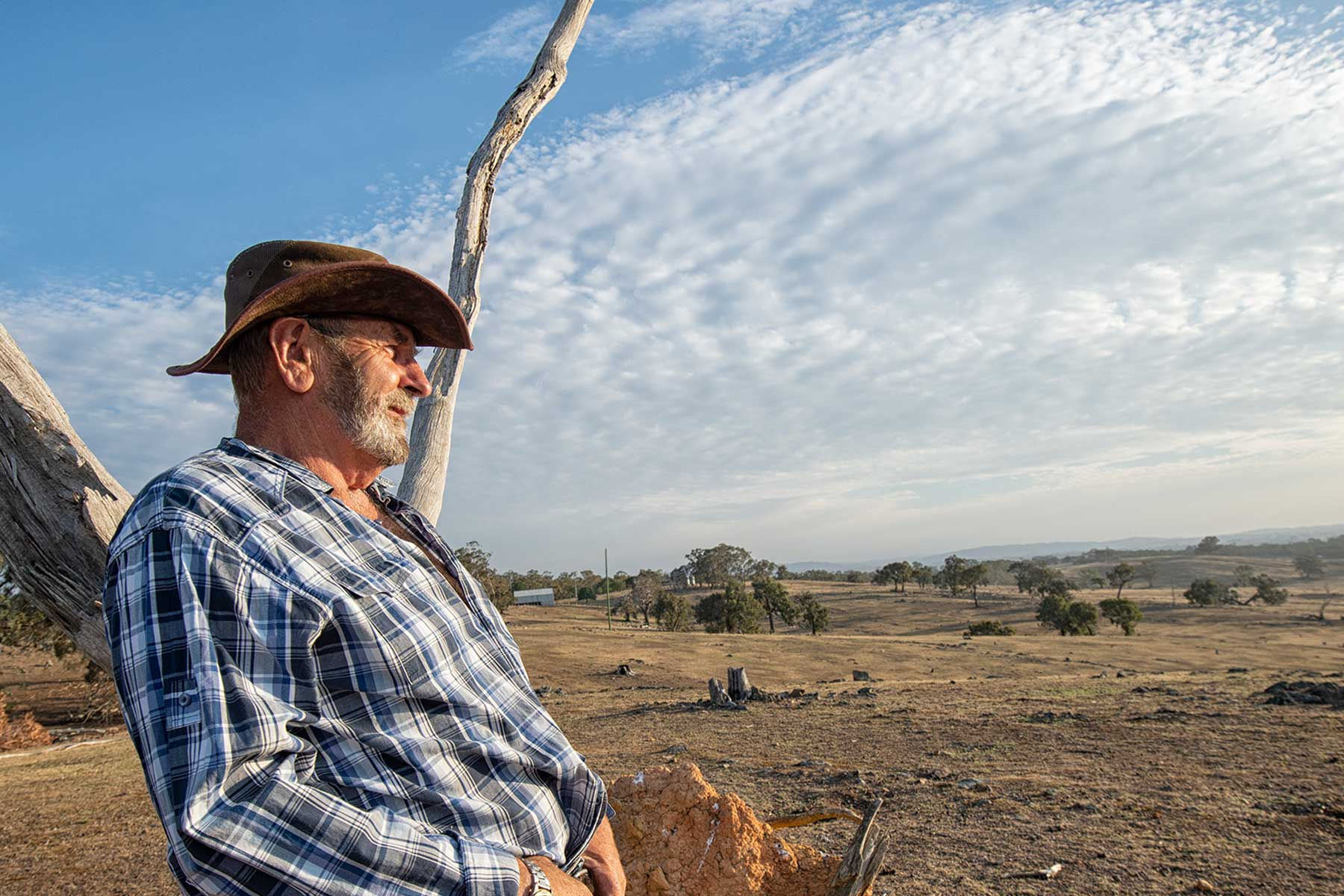 Farmer looking out over drought affected farm land